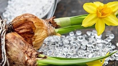 Ce bulbi de flori pot alege pentru toamnă?