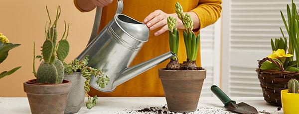 Ce faci toamna cu plantele la ghiveci