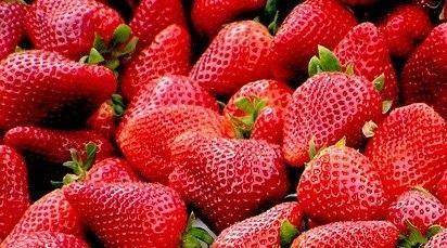 Care sunt principalele boli ale căpșunului și cum le poți preveni