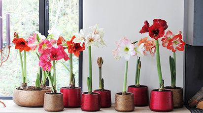 Condițiile optime iarna pentru plante de cameră sănătoase