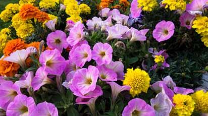 Tipuri de plante pentru grădină ușor de îngrijit