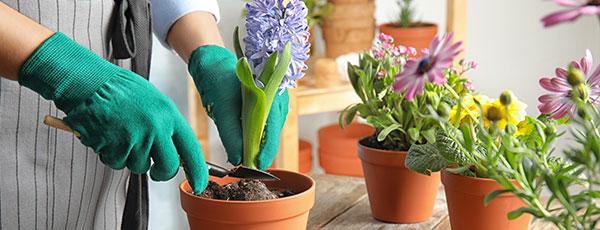 Lucrări de toamnă: pașii esențiali pentru plantarea bulbilor de flori