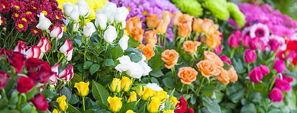 Plantarea de toamnă a trandafirilor - sfaturi pas cu pas pentru începători