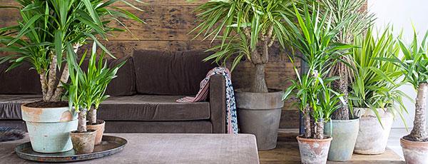 Top 3 plante nepretențioase de apartament pentru o îngrijire facilă