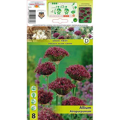 Allium Atropurpureum imagine 1 articol 68053