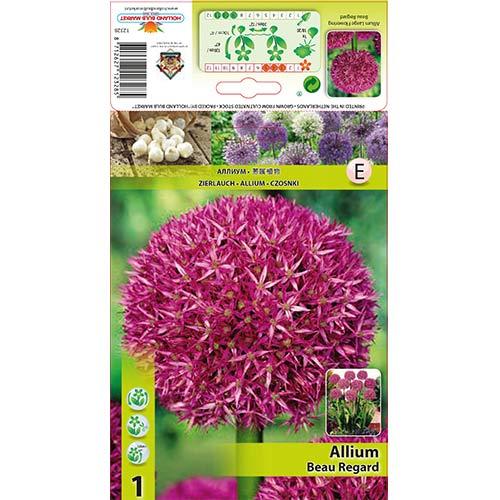 Allium Beau Regard imagine 1 articol 68054