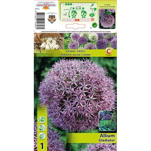 Allium Gladiator imagine 1 articol 67296