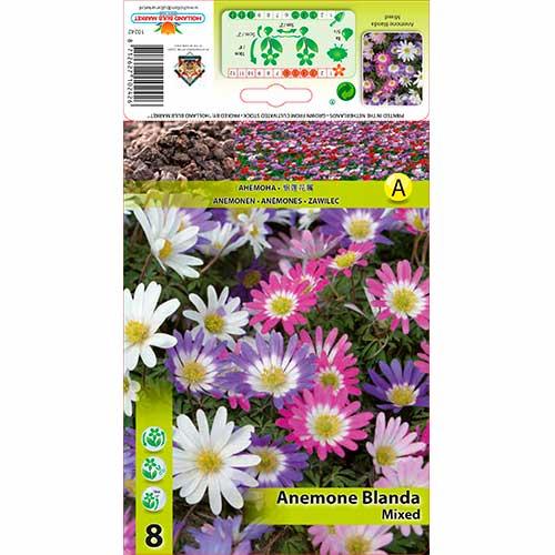 Anemone blanda mix multicolor imagine 1 articol 67578