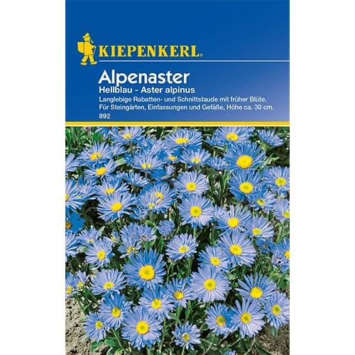 Aster alpin Light Blue Kiepenkerl imagine 1 articol 77395