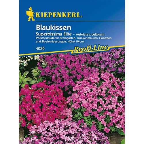 Aubrieta Superbissima Elite Kiepenkerl imagine 1 articol 86256
