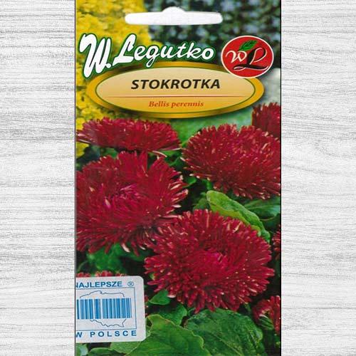 Bănuței roșii cu flori mari Legutko imagine 1 articol 78616