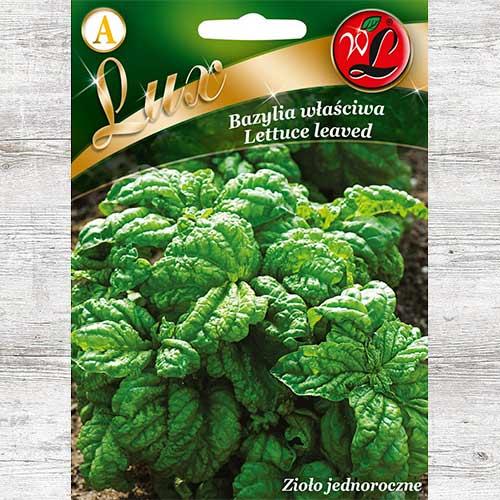 Busuioc Lettuce Leaved Legutko imagine 1 articol 86841