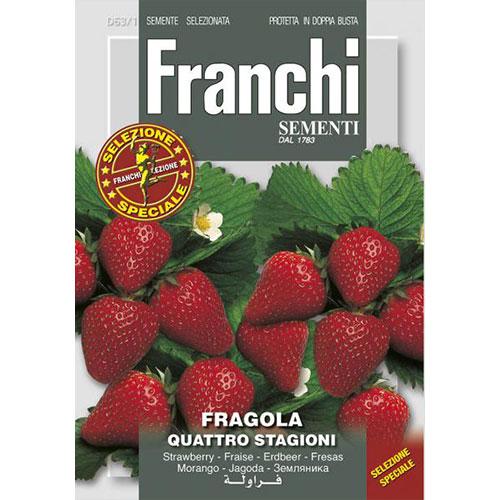 Căpșuni Quattro Stagioni imagine 1 articol 87142