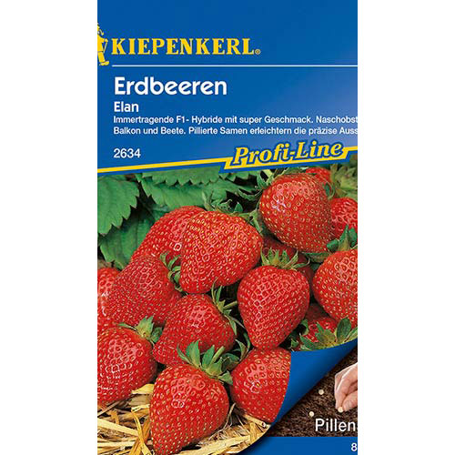 Căpșuni Elan F1 Kiepenkerl imagine 1 articol 86447