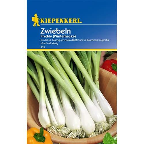 Ceapă verde Winterhecke Kiepenkerl imagine 1 articol 77460