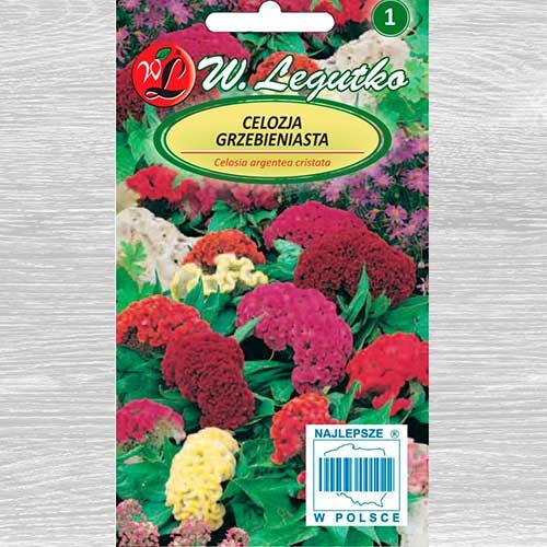Celosia, mix multicolor Legutko imagine 1 articol 69573