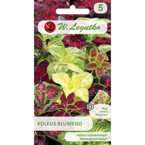 Coleus Standard, mix multicolor Legutko imagine 1 articol 69597