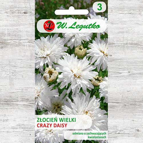 Crizantemă Crazy Days Legutko imagine 1 articol 86805