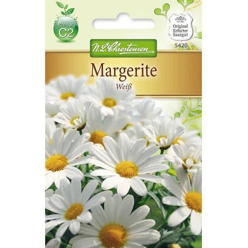 Crizantemă White Chrestensen imagine 1 articol 78972