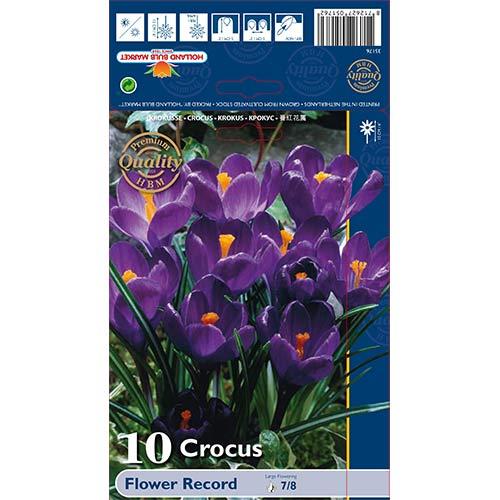 Brândușe Flower Record imagine 1 articol 67330