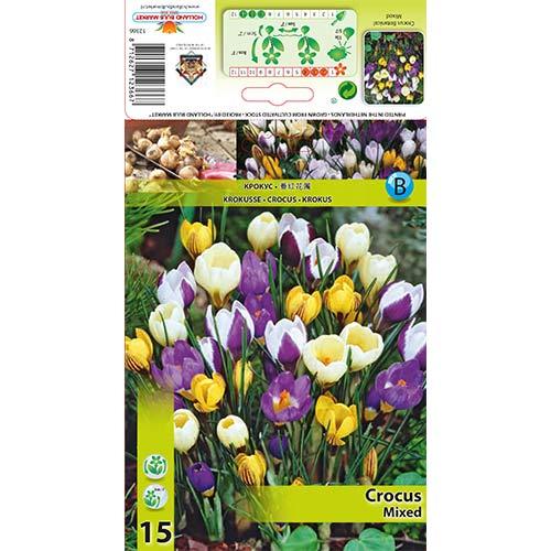 Brândușe botanical mix multicolor
