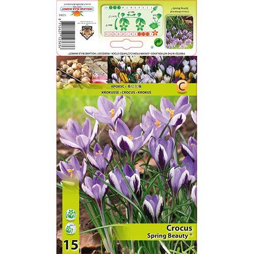 Brândușe Spring Beauty imagine 1 articol 67342