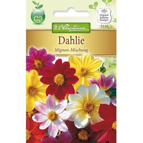 Dalii Mignon, mix multicolor Chrestensen imagine 1 articol 78907