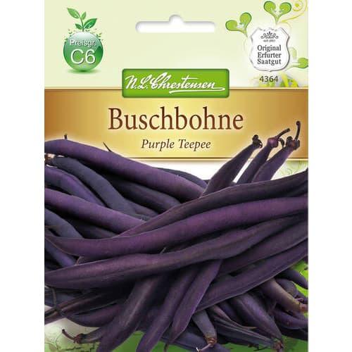 Fasole Purple Teepee Chrestensen imagine 1 articol 78823