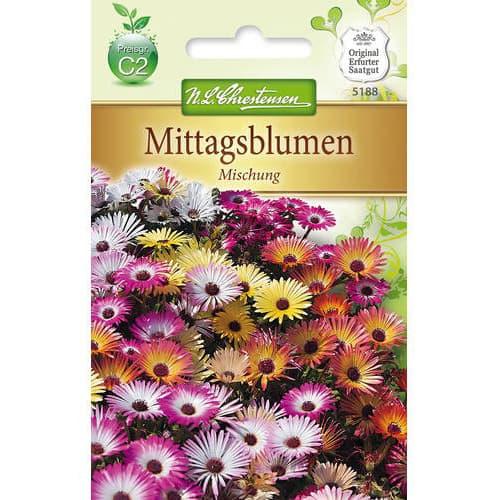 Floarea de cristal (Delosperma), mix multicolor Chrestensen imagine 1 articol 78923