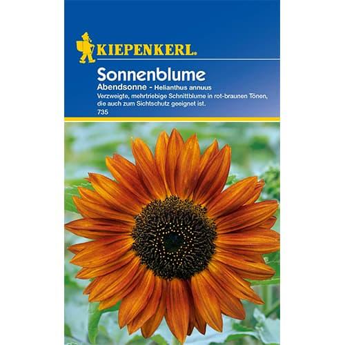 Floarea soarelui decorativă Abendsonne Kiepenkerl imagine 1 articol 77405