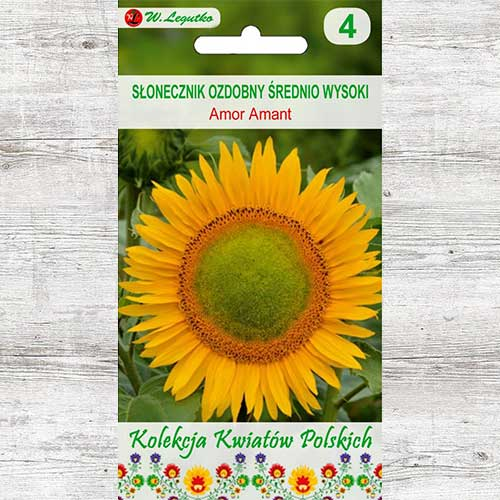 Floarea soarelui decorativă Amor Amant Legutko imagine 1 articol 86736