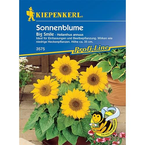 Floarea soarelui decorativă Big Smile Kiepenkerl imagine 1 articol 86319