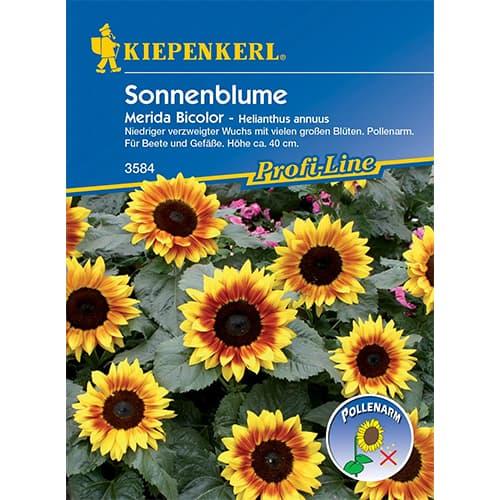 Floarea soarelui decorativă Merida Bicolor Kiepenkerl imagine 1 articol 86324