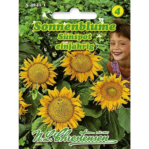 Floarea soarelui decorativă Sunspot Chrestensen imagine 1 articol 86152