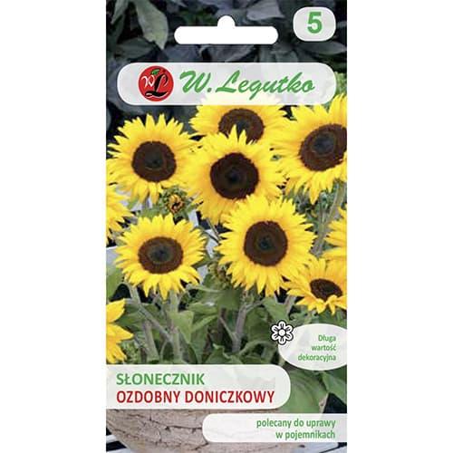Floarea soarelui decorativă Polino Cola Legutko imagine 1 articol 69627