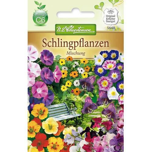Flori cățărătoare, mix multicolor Chrestensen imagine 1 articol 78989