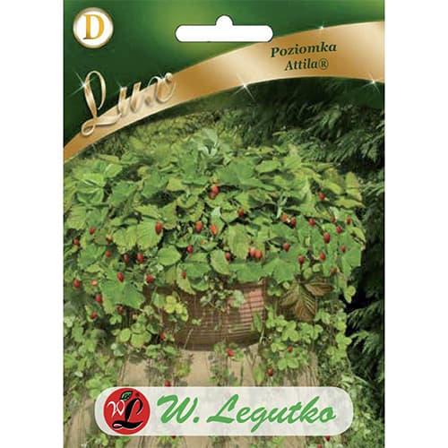 Fragi Attila Legutko imagine 1 articol 69663