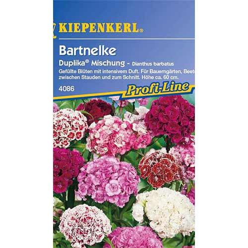 Garoafă turcească Duplika Kiepenkerl imagine 1 articol 86250