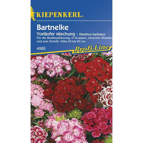 Garoafă turcească Vorlaufer, mix multicolor Kiepenkerl imagine 1 articol 77445