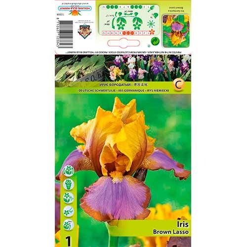 Iris germanica (Stânjenel) Brown Lasso imagine 1 articol 76285