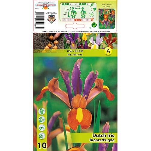 Iris olandez Bronze imagine 1 articol 68129