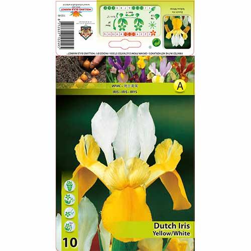 Iris olandez Yellow/White imagine 1 articol 68127