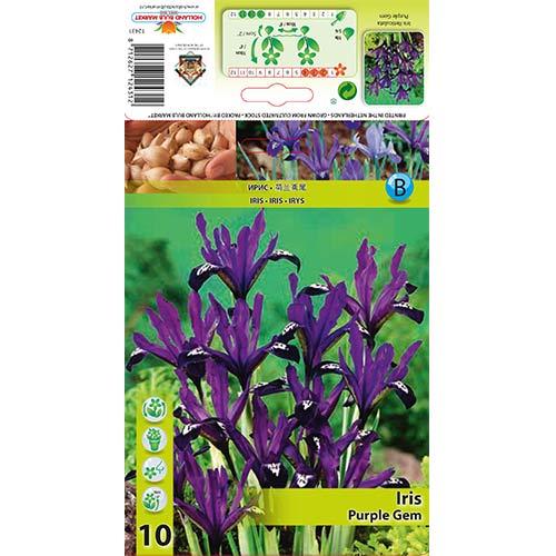 Iris Purple Gem imagine 1 articol 67382