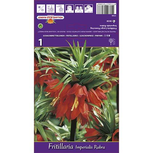 Lalea imperială (Fritillaria) Rubra imagine 1 articol 68101