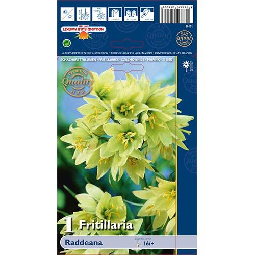 Lalea imperială (Fritillaria) Raddeana imagine 1 articol 70244
