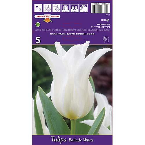 Lalele Ballade White imagine 1 articol 67691
