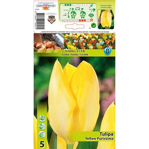 Lalele Yellow Purissima imagine 1 articol 67734