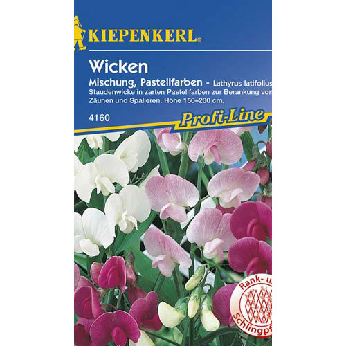 Lathyrus latifolius (Măzăriche) Pastell, mix multicolor Kiepenkerl imagine 1 articol 77447
