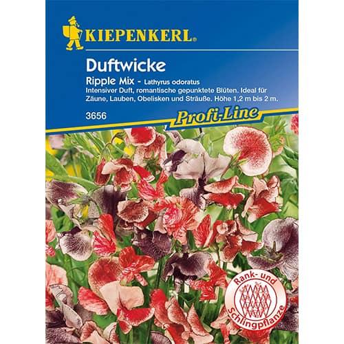 Lathyrus odoratus (Sângele voinicului) Ripple, mix multicolor Kiepenkerl imagine 1 articol 86262