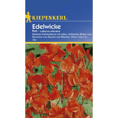 Lathyrus odoratus (Sângele voinicului) roșu Kiepenkerl imagine 1 articol 77417